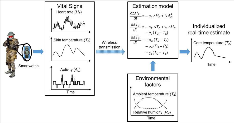 Schematic of BHSAI's AI algorithm to provide individualized estimates of core body temperature in real time, using non-invasive physiological and environmental data.