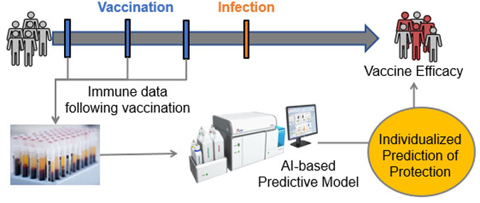 During a vaccine clinical trial, immunological data are collected at several time points following vaccination, prior to infection. Data from each subject are then fed into an AI-based model to make an individualized prediction of protection, which is compared with the clinically observed protection status of that subject. An accurate predictive model can be used to determine what combination of immune responses is most responsible for protection, providing a basis for guiding future vaccine design efforts.